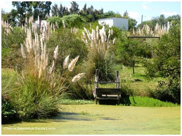 Cortaderia selloana en el tajamar - Chacra Educativa Santa Lucía