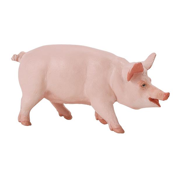 Cuestiones Cerdo Cebra