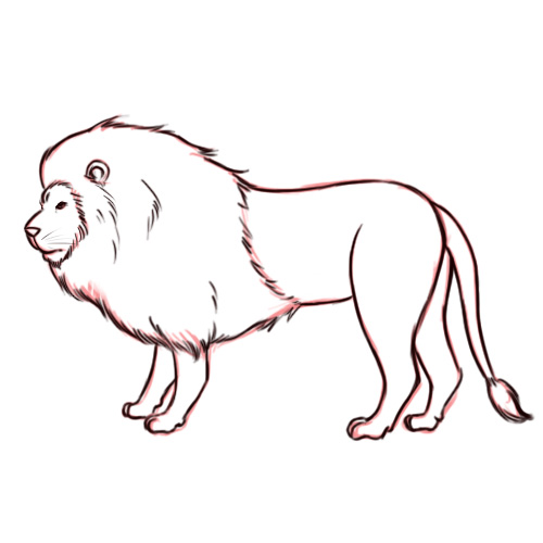 Pencil sketches and drawings how to draw a lion - Dessiner un lion facile ...