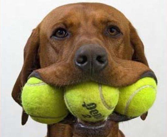how to cut tennis balls for walker