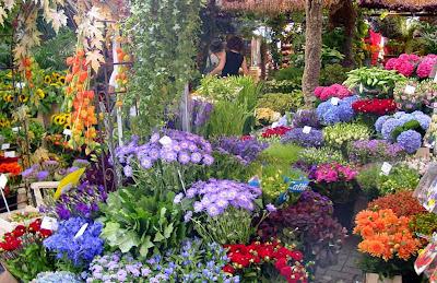 парад-цветов-в-нолландии