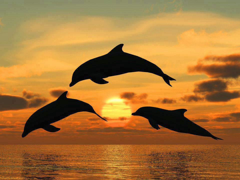 Beach at Sunset with Dolphins