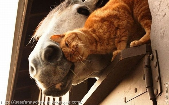 Cat and horse.