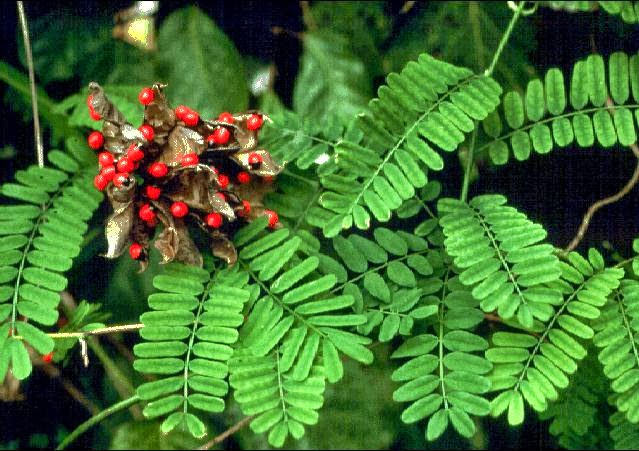Top 5 Toxic Plants In The World