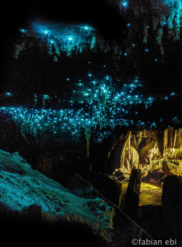 Waitomo New Zealand  city pictures gallery : Waitomo Glowworm Caves, New Zealand