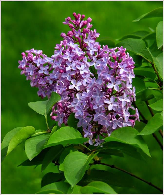 Hoa màu tím
