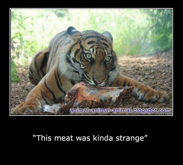 cool animals memes