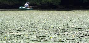 Fishing diary
