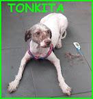 TONKITA 2 anni