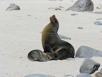 Female Sea Lion with Pup