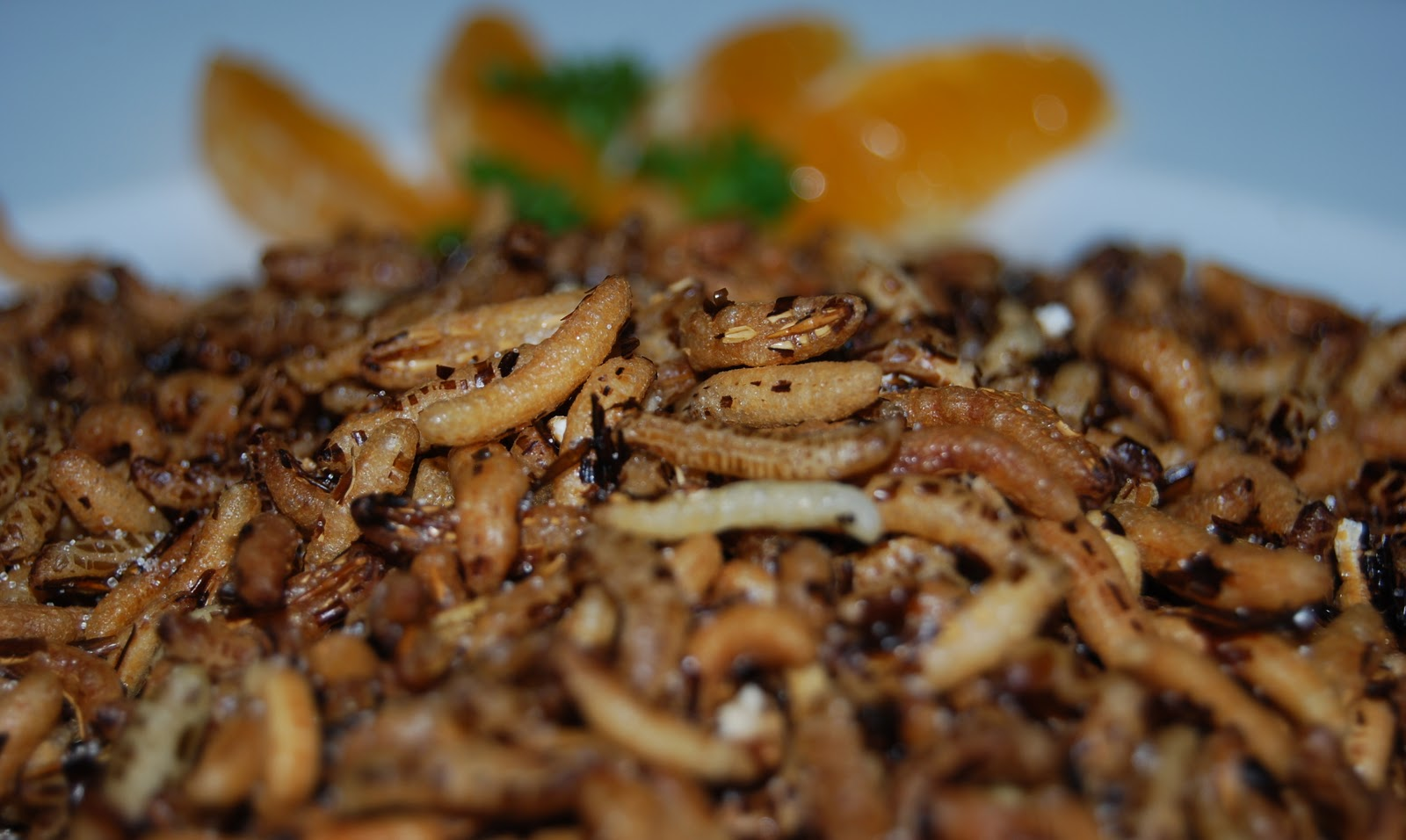 Fried Maggots Cocina viva: fried wild rice (arroz salvaje frito)
