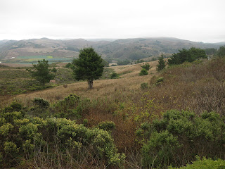 View from Stage Road near Highway 1, San Gregorio, California