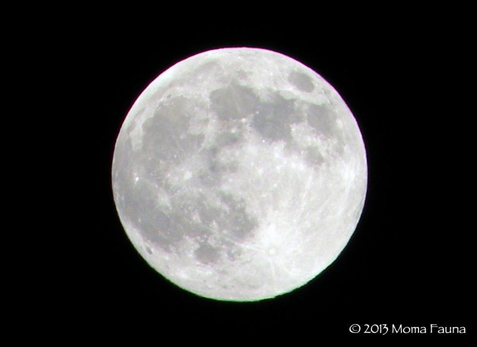 Super Moon 2013, as seen in the high desert sky.