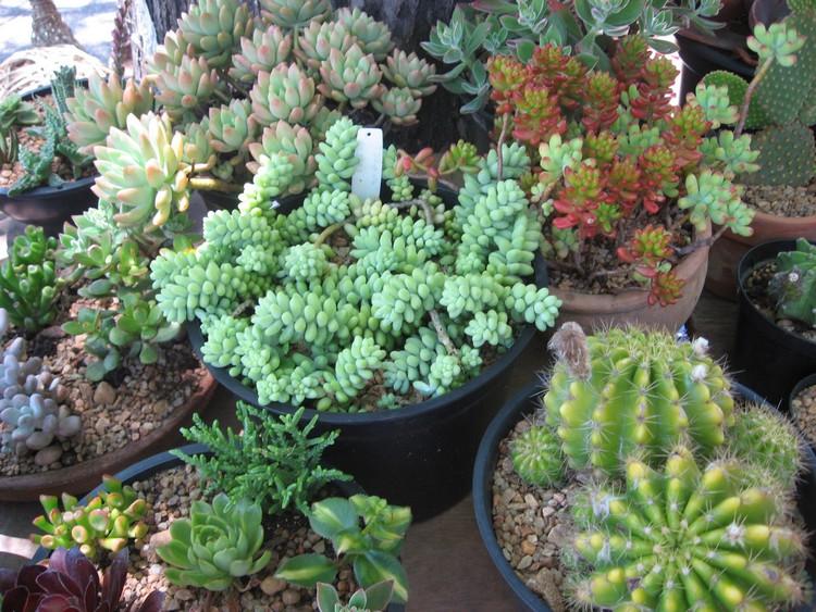 Exemplos de Mini Jardim de cactos e ou Suculentas