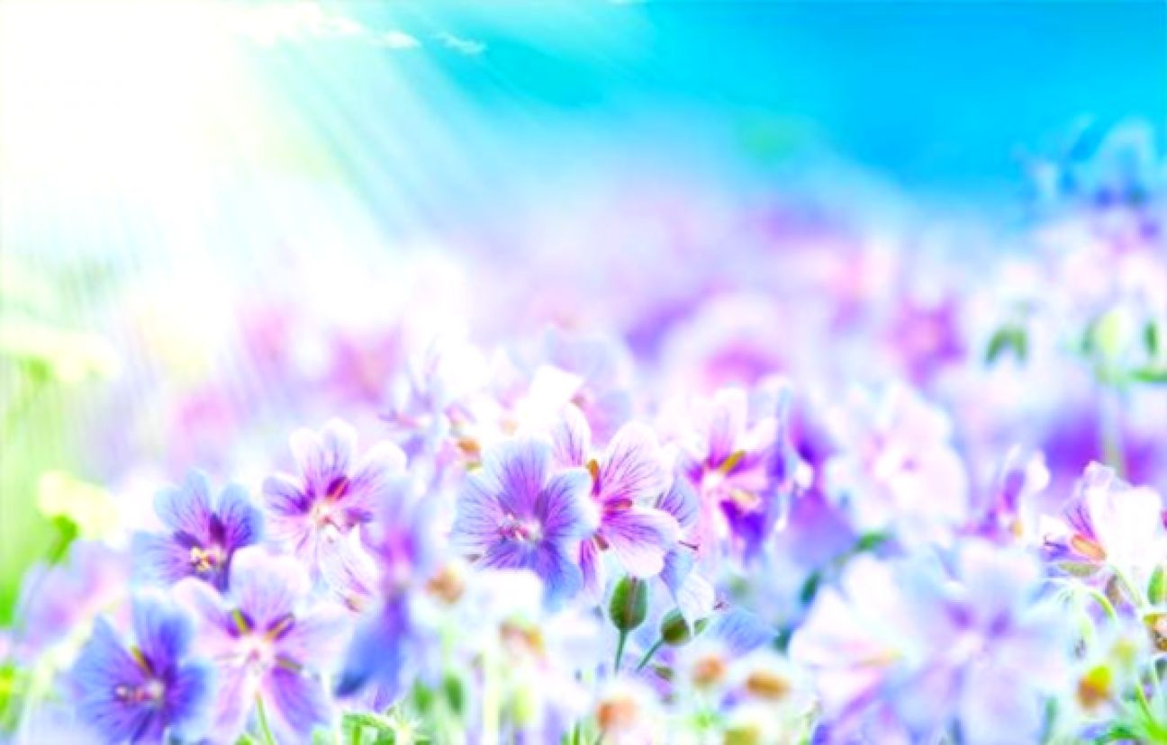 Purple flowers background best wallpapers hd gallery view original size abstract soft sweet blue purple flower background mightylinksfo