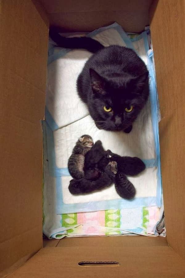 Funny cats - part 78 (35 pics + 10 gifs), cat pics, mommy cat and her baby