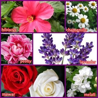 6 Jenis Bunga Wangi Untuk Kesehatan Tubuh