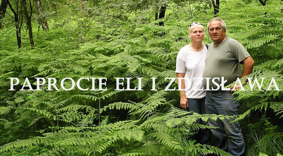 Paprocie Eli i Zdzisława