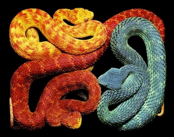 http://3.bp.blogspot.com/-79Rk-byuyFs/TpbPrgUV5RI/AAAAAAAADA8/MoNoOt7NKgI/s1600/256711%252Cxcitefun-fascinating-snakes-02.jpg