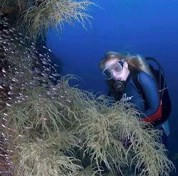 Wisata Laut Manado