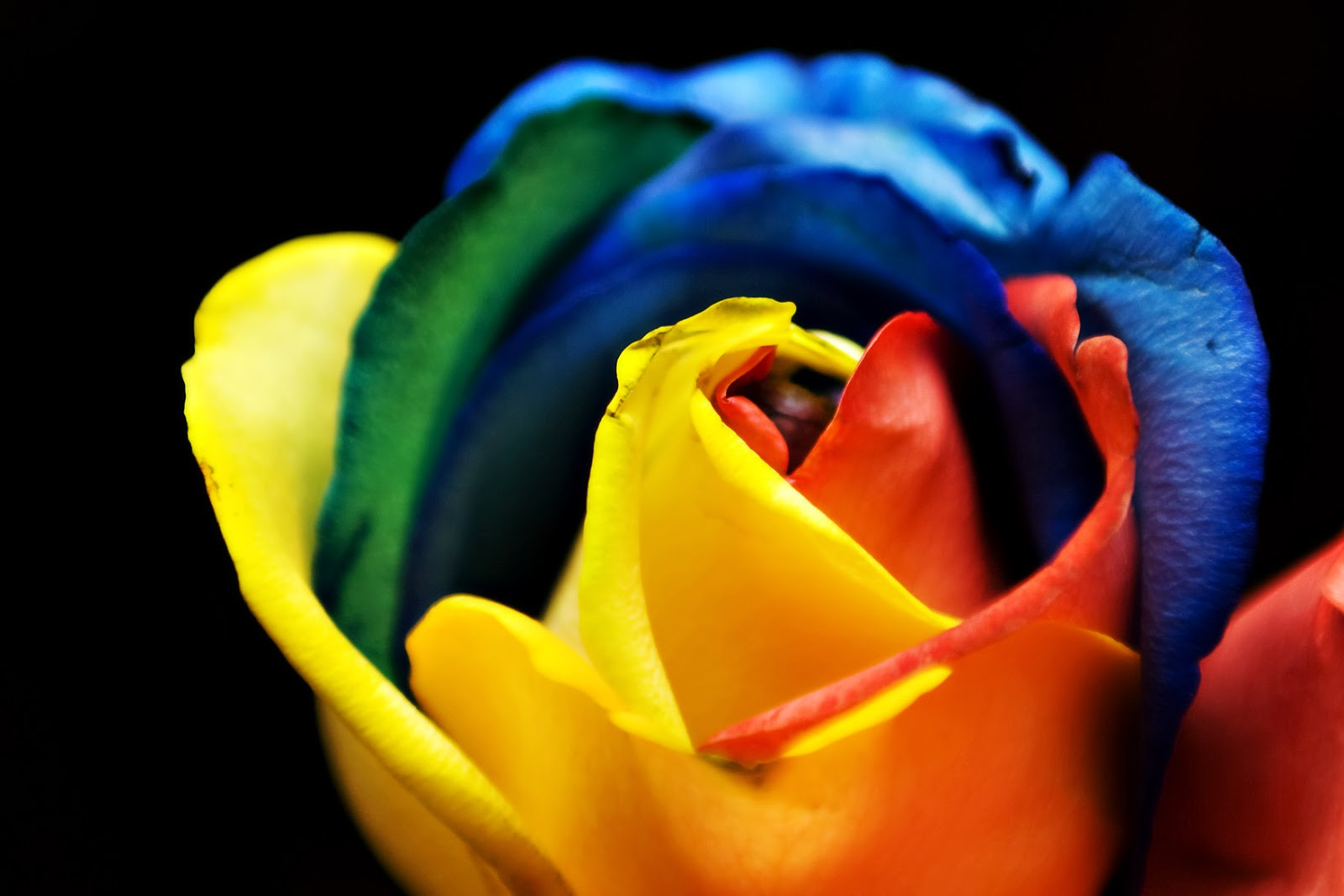 Life enhancing vanilla essence ing for How much are rainbow roses