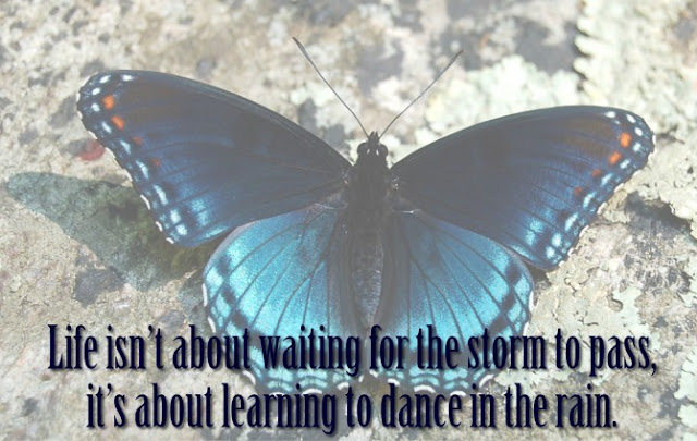 butterfly in rain quotations