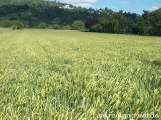 Die Kornfelder beherbergen nur noch selten Kornblumen