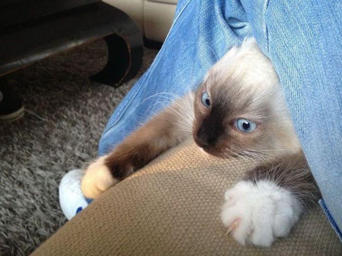 Сумасшедшие коты, фото 6