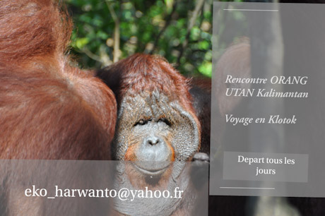 Visiter Borneo Kalimantan