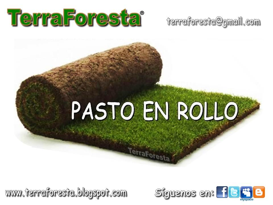 Pasto en rollo terraforesta for Cesped en rollo