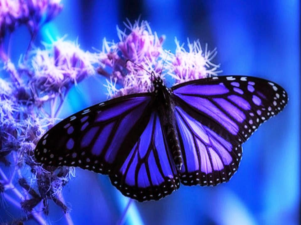 Imagenes de Mariposas, parte 1