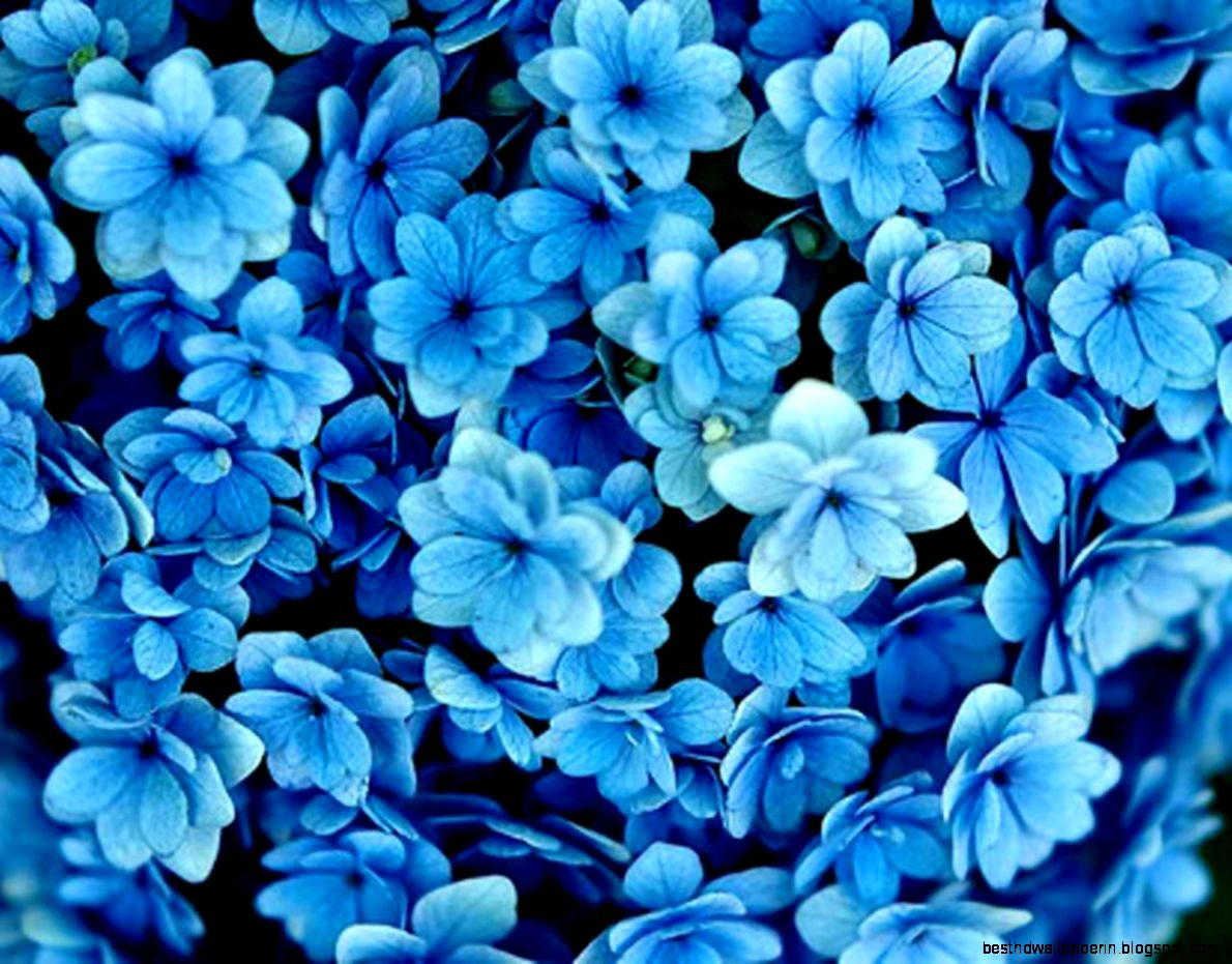 dark blue flowers tumblr wallpaper hd photos dark blue