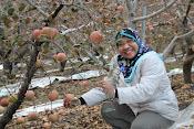 Memetik apple di Korea...