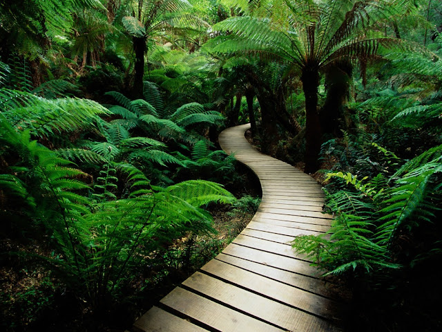 Way on deep forest HD Wallpaper