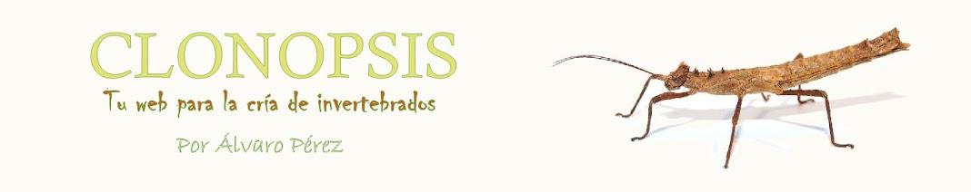 CLONOPSIS