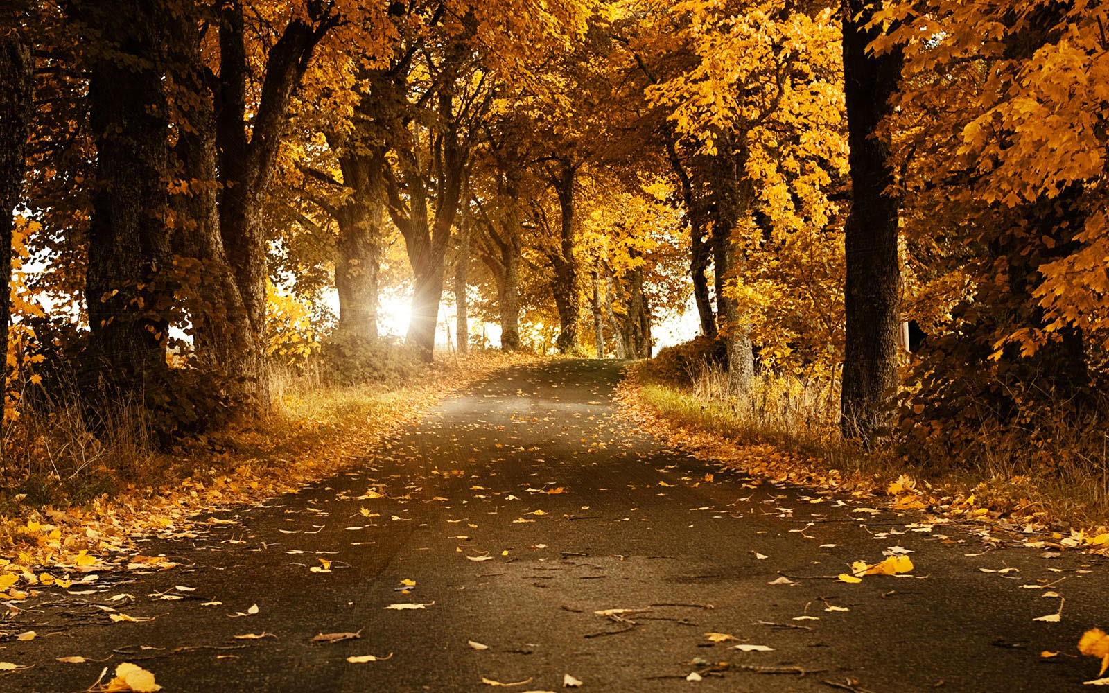 fall nature wallpaper for computer - photo #42