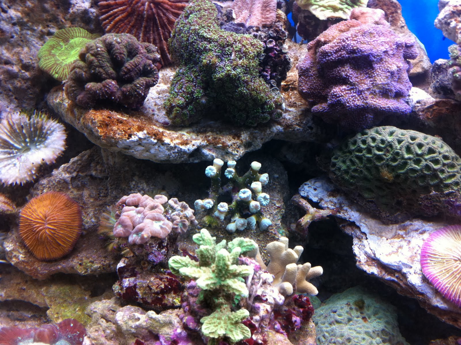 Animaliamo acquario marino 1 fase allestimento struttura for Acquario marino