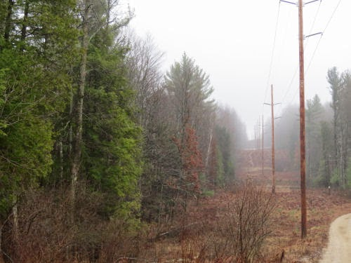 power line in the mist