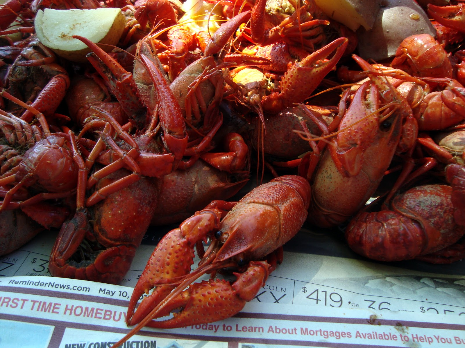 You Can See We Do Have A Stainless Steel Bowl With A Few Tails That Didn  Steamed Crawfish Ready To Eat Boiled