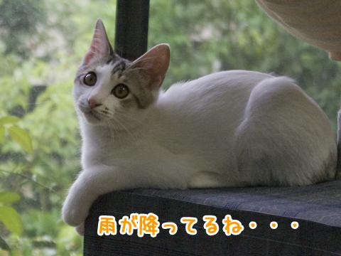 キャットタワーの上の子猫