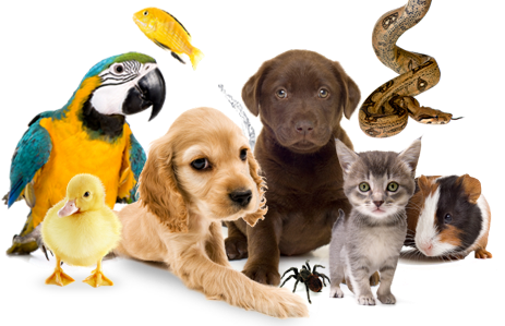 Click for Stories about Pets
