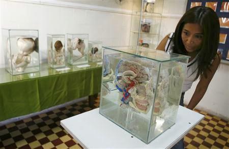 Brain Museum
