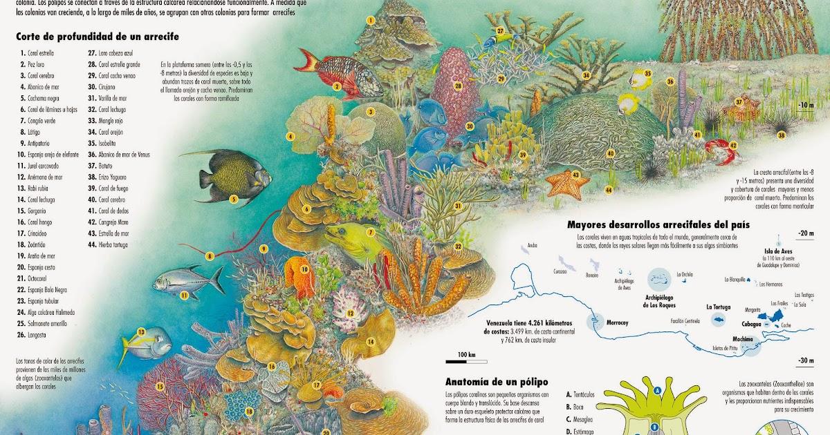 Haga clic para continuar: Arrecifes de coral en Venezuela