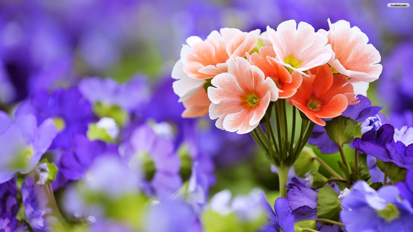 Most Beautiful Flowers In The World Flower With Styles