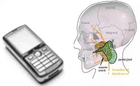 an examination of the health hazards of cellular phones Health risks posed by electromagnetic radiation exposure from cellular by electromagnetic radiation exposure from health risks from mobile phones.