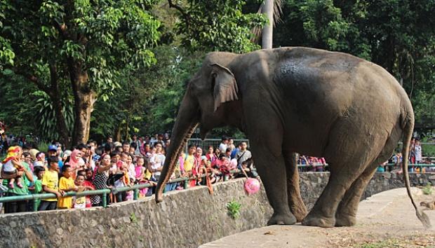 Plesiran di Kebun Binatang