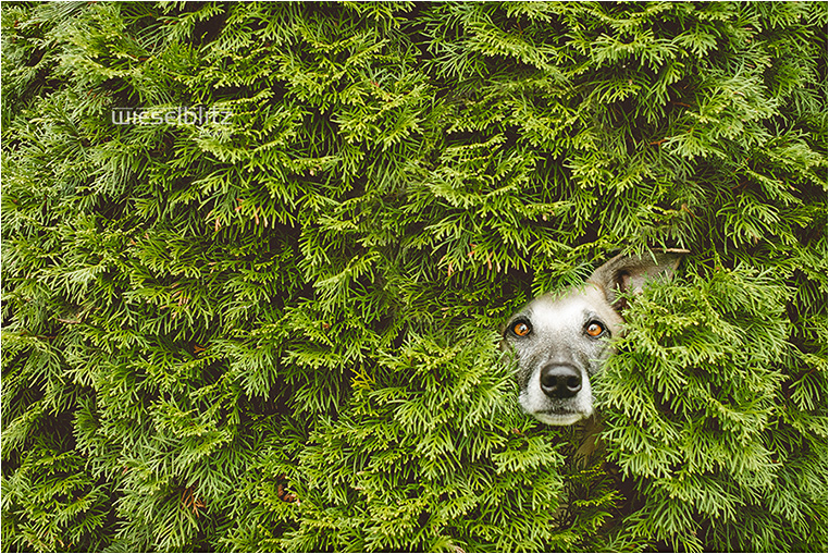 Emerging Photographers, Best Photo of the Day in Emphoka by Elke Vogelsang