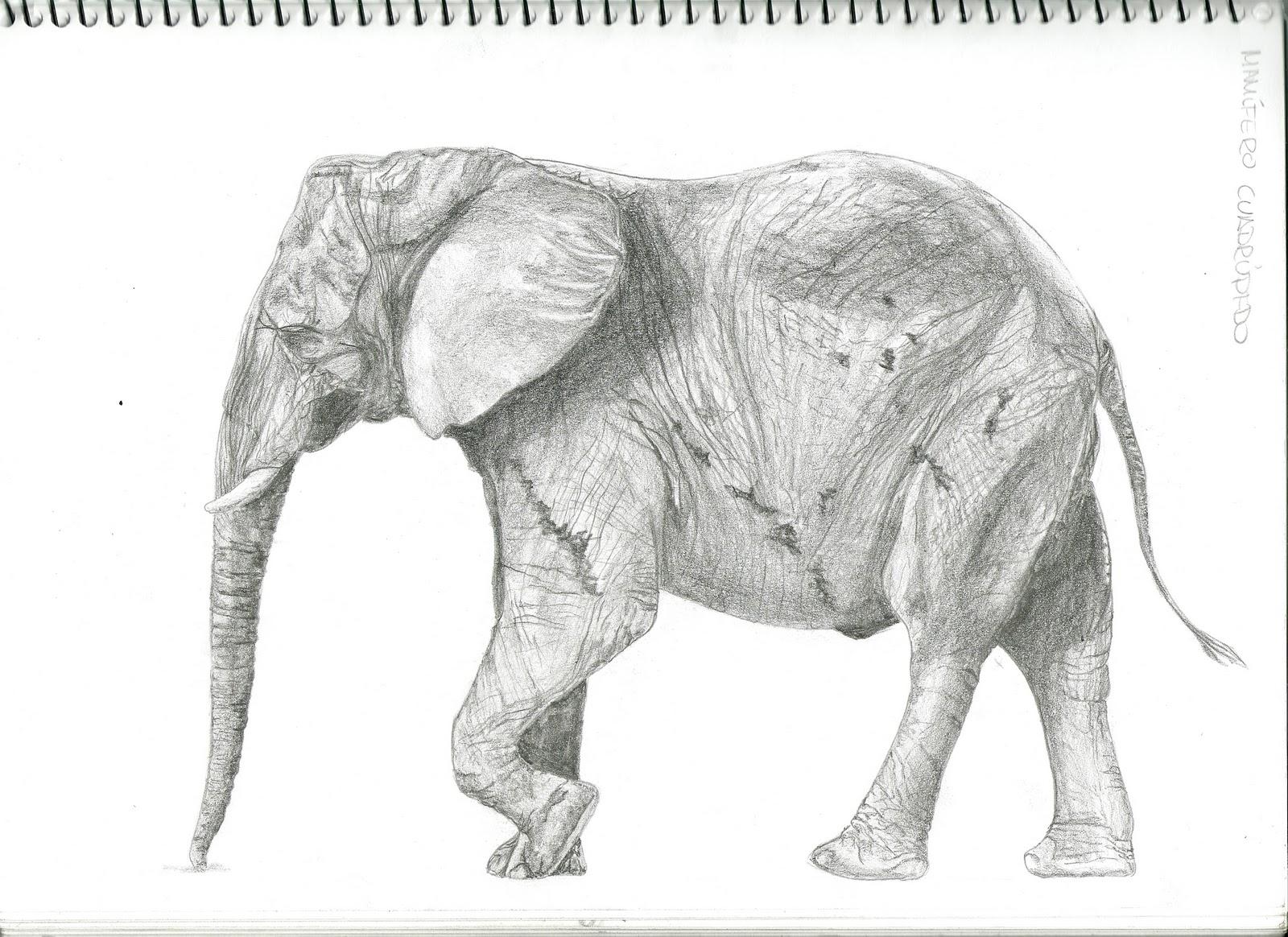Tahissa---: Animales