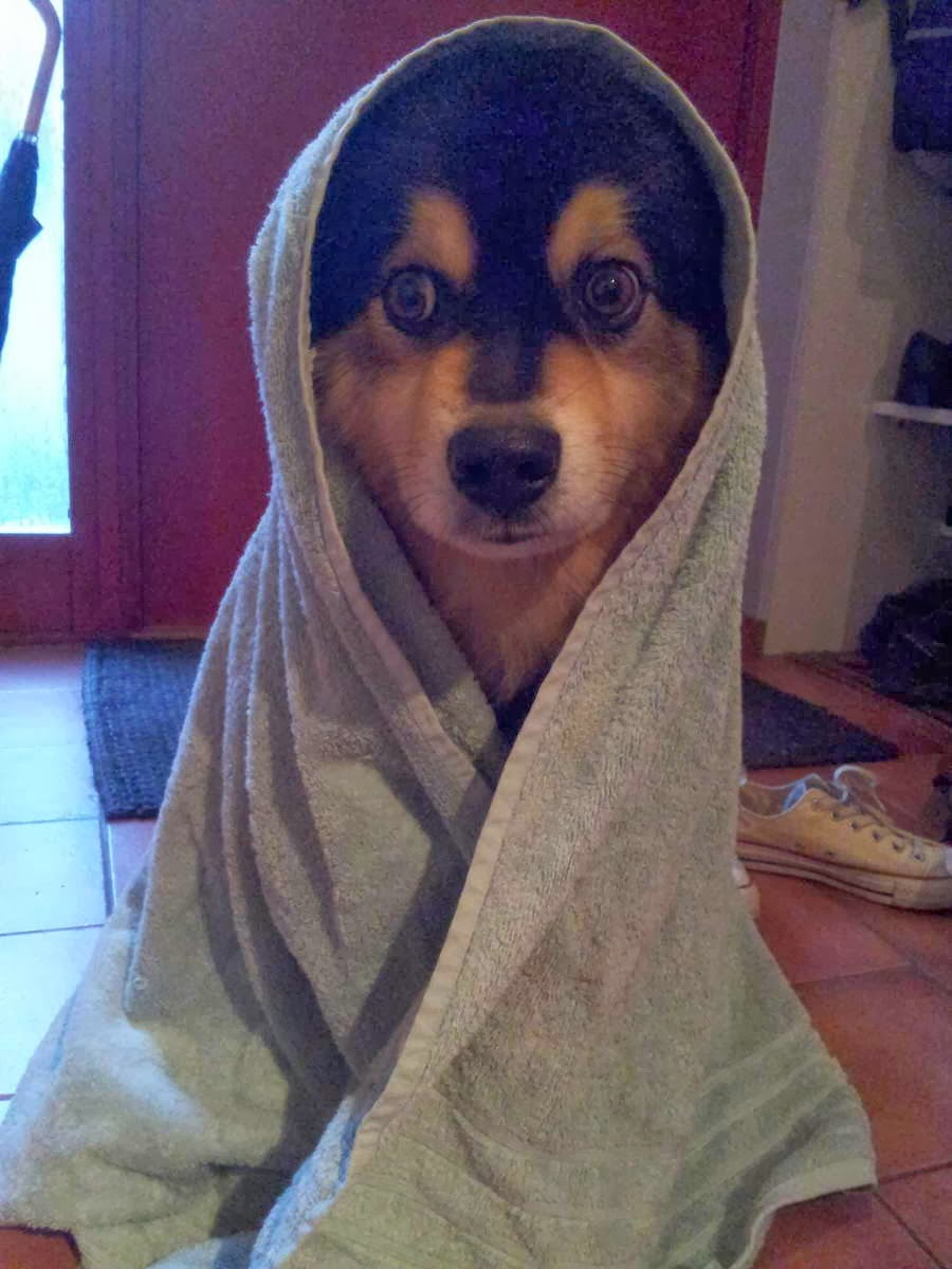 Cute dogs - part 3 (50 pics), dog wears blanket