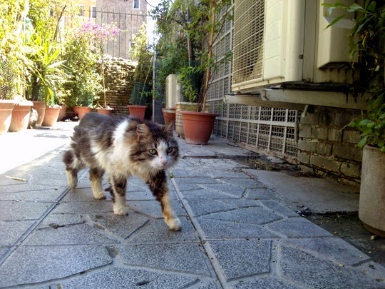 Rome Cat Sanctuary